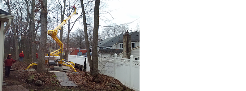 Tree Service | Allen's Tree Service | East Windsor, NJ | (609) 259-8668